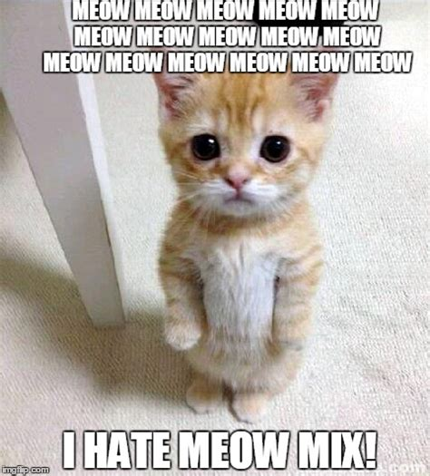Cat Meow Meme - cute cat meme imgflip