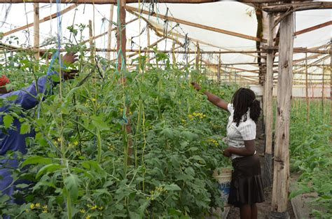 House Blueprints For Sale greenhouse farming tanzania africa tanzaniachildren