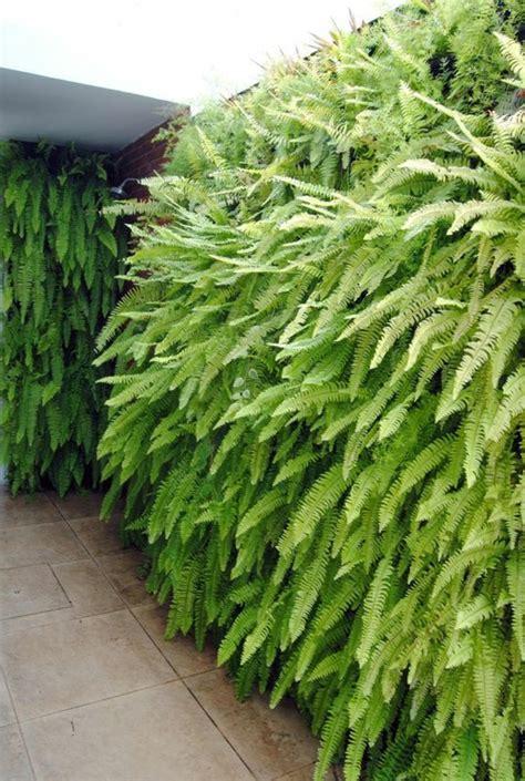 Habiller Mur Exterieur Avec Plantes by 1001 Id 233 Es Pour Habiller Un Mur Ext 233 Rieur Murs