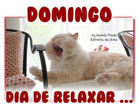imagenes feliz domingo con gatos frases de domingo