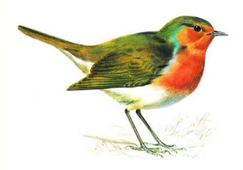 robin identification habitat food