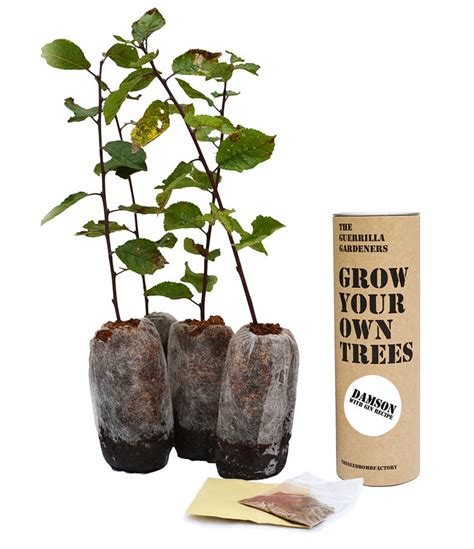 grow your own tree kit grow your own tree damson gin kits by the seed bomb factory notonthehighstreet