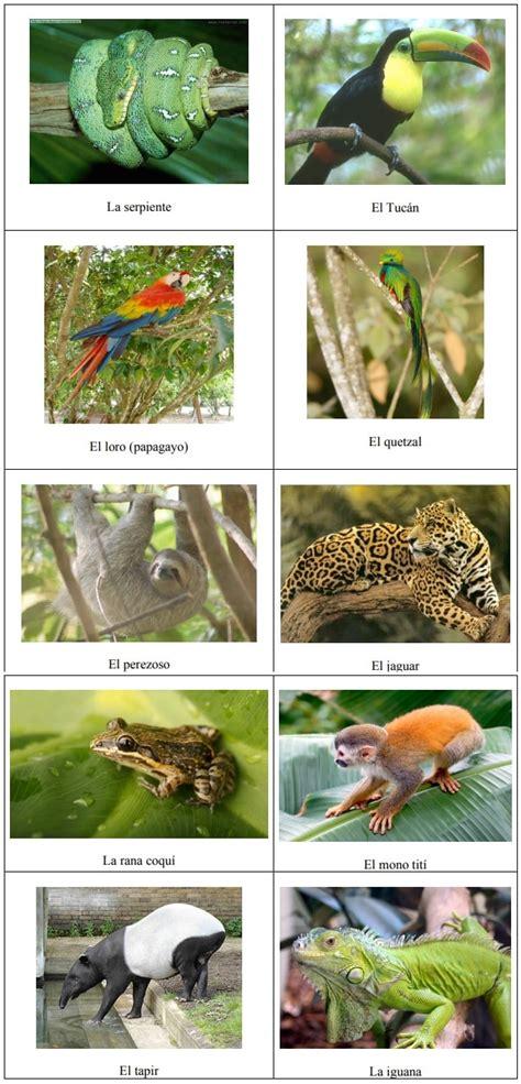 imagenes de animales y plantas de la selva las plantas en la selva tropical y su fauna