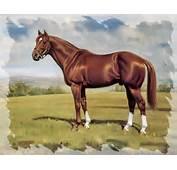 Secretariat  Horse Wallpaper ForWallpapercom