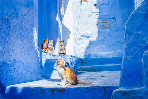 the blue city morocco the about morocco s blue city chefchaouen