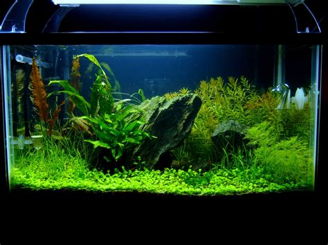 tank aquascape 10 gallon aquascaping journal aquascaping aquatic plant central