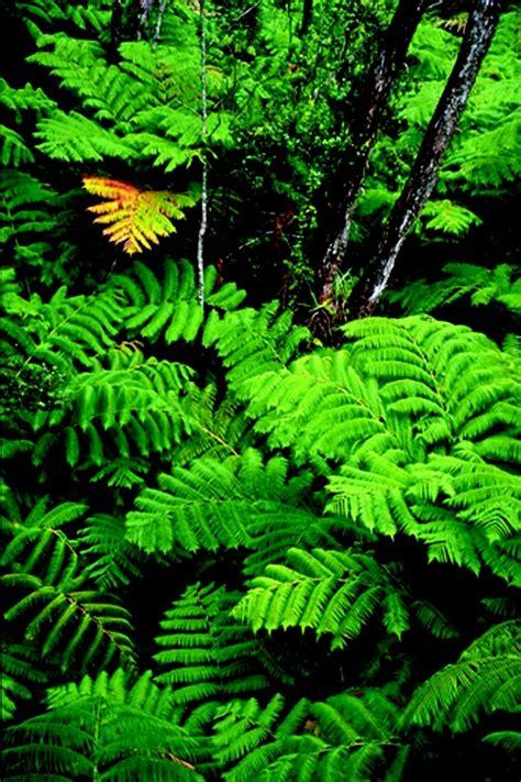sun tropical plants 179 best images about tropical plants sun on