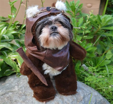 ewok puppy wars ewok costume
