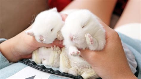 Cute Baby Bunnies ? WeNeedFun