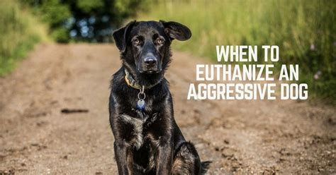when to euthanize a when to euthanize an aggressive thatmutt a