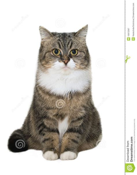 cat sock sitting cat stock image image of white feline
