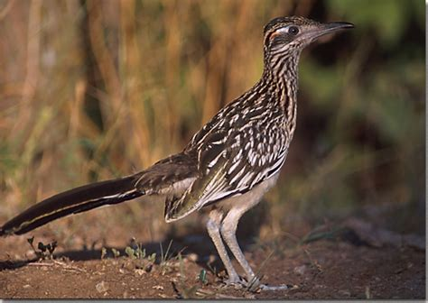 sam s guide to backyard birds
