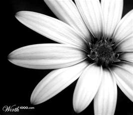 Parts Of Daisy Flower - black and white flowers google search black and white