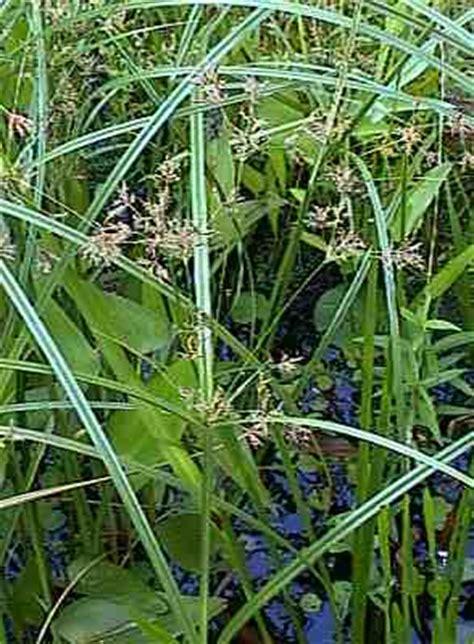 Pflanzen Für Den Teich 1037 by Teich Im Sommer 2