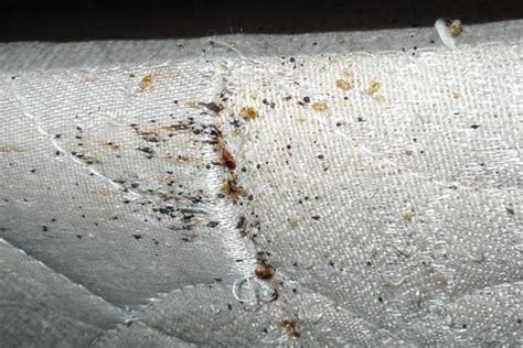 bed bugs in mattress what mattress encasements are and how they are used in bed