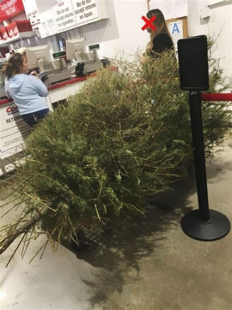 women returns used christmas tree to costco in january