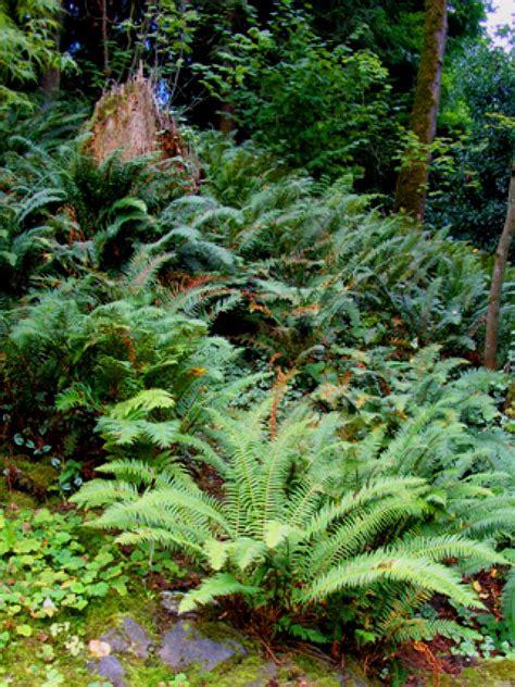 naturnaher garten pflanzen shade tolerant plants for woodland gardens hgtv