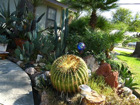backyard cactus garden rock oak deer september 2012