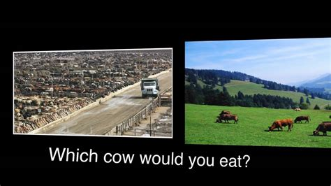 Which Do You Eat by Corn Vs Grass Fed Meats Which Cow Would You Eat Part