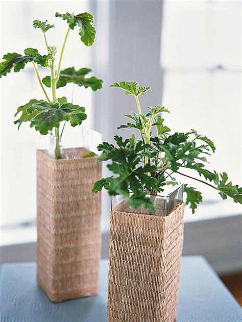 best scented geranium indoors top fragrant houseplants