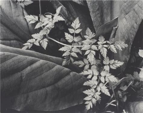 leaf pattern imogen cunningham imogen cunningham the buzz blog diane james home