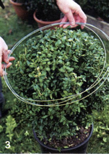 how to trim a topiary gardening product 1