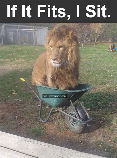 if it fits i sits pictures photos and images for