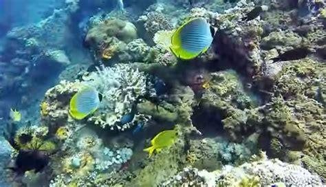 Snorkling Anak snorkeling dan berenang dengan anak hiu di pantai