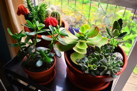 houseplants part ii home air purification