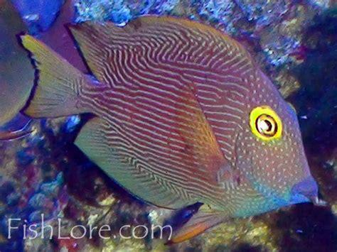 golden retriever scientific classification tang fish varieties