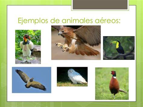 100 ejemplos de animales terrestres y acuticos power zoo