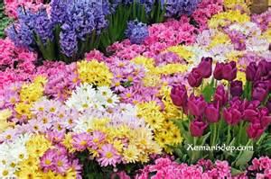 My Flower Garden My Amazing Things Beautiful Flower Garden Photos