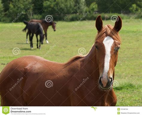 nice hourse nice horses stock photo image of mare pferd animals