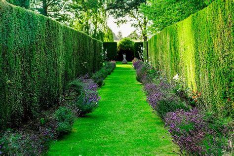 siepi per giardino siepi da giardino come realizzarle e renderle perfette