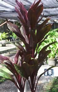 maui tropical flowers tropical gardens of maui hawaii
