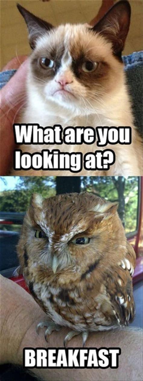 Random Cat Meme - 17 best images about grumpy cat on pinterest gift quotes
