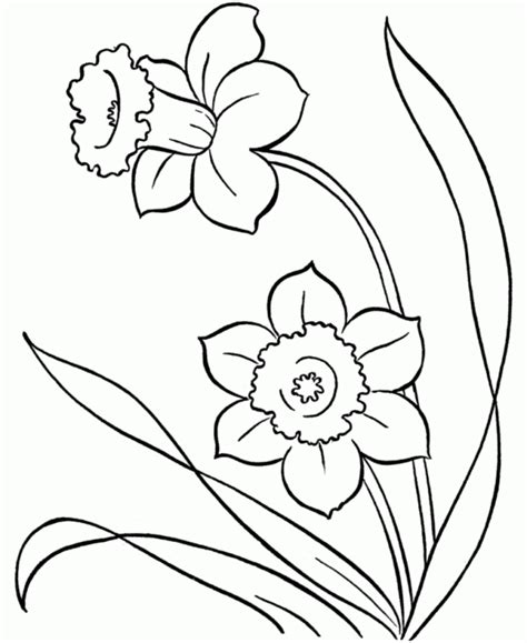 plants coloring pages preschool flower flowers spring coloring pages preschool flower