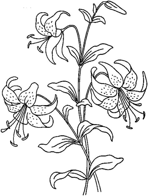 Printable Coloring Pages Of Realistic Flowers | realistic flowers coloring pages print flower coloring