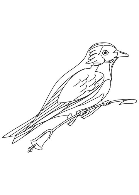 Blue Bird Cartoon Coloring Home Bluebird Coloring Page