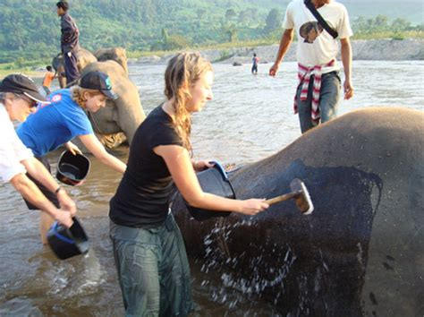 travel volunteer a how to guide to volunteer vacations julia dimon