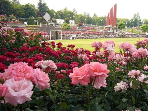 imagenes de jardines con rosales jardines de rosales