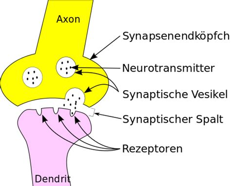 Neurotransmitters Also Search For Neurotransmitter Kevin Bsc Msc Psychotherapeut