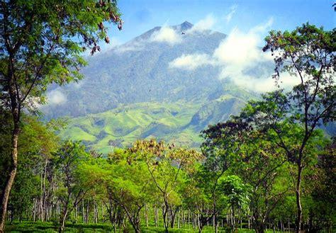 Teh Wonosari kebun teh wonosari lawang info wisata malang wisata malang