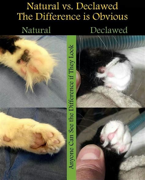 declawing dogs 17 best images about take a stand on for cats animals and toe