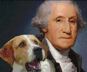 yorkie breeders ta fl what did george washington breed pets wallpapers