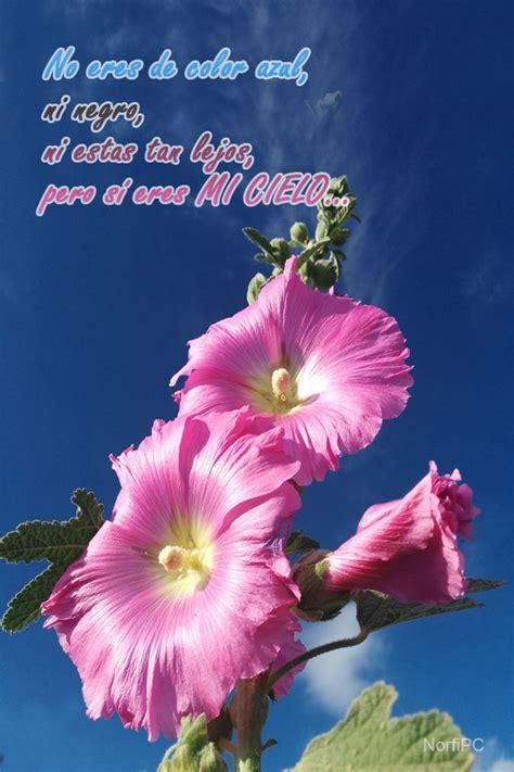 bonitas para portada del telfono fondos para el celular o tablet con palabras de amor
