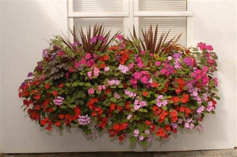 flowers for window boxes in partial shade choose flowers for window boxes www coolgarden me