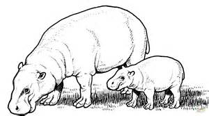 what color are hippos pygmy hippopotamus with baby coloring page