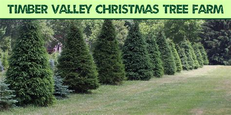 best 28 christmas tree farm medina ohio christmas