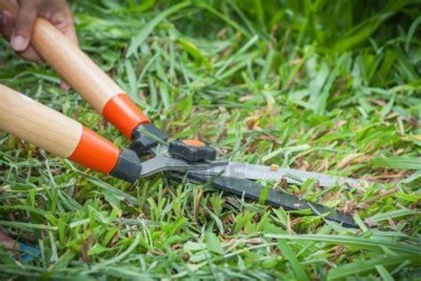 corso per giardiniere giardinieri ora serve un patentino il corso in